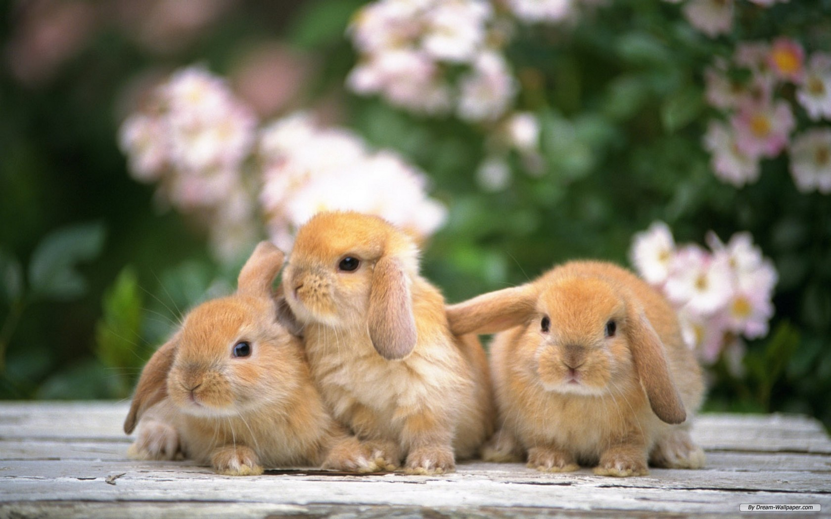 Cute Rabbits Animals Wallpaper Free