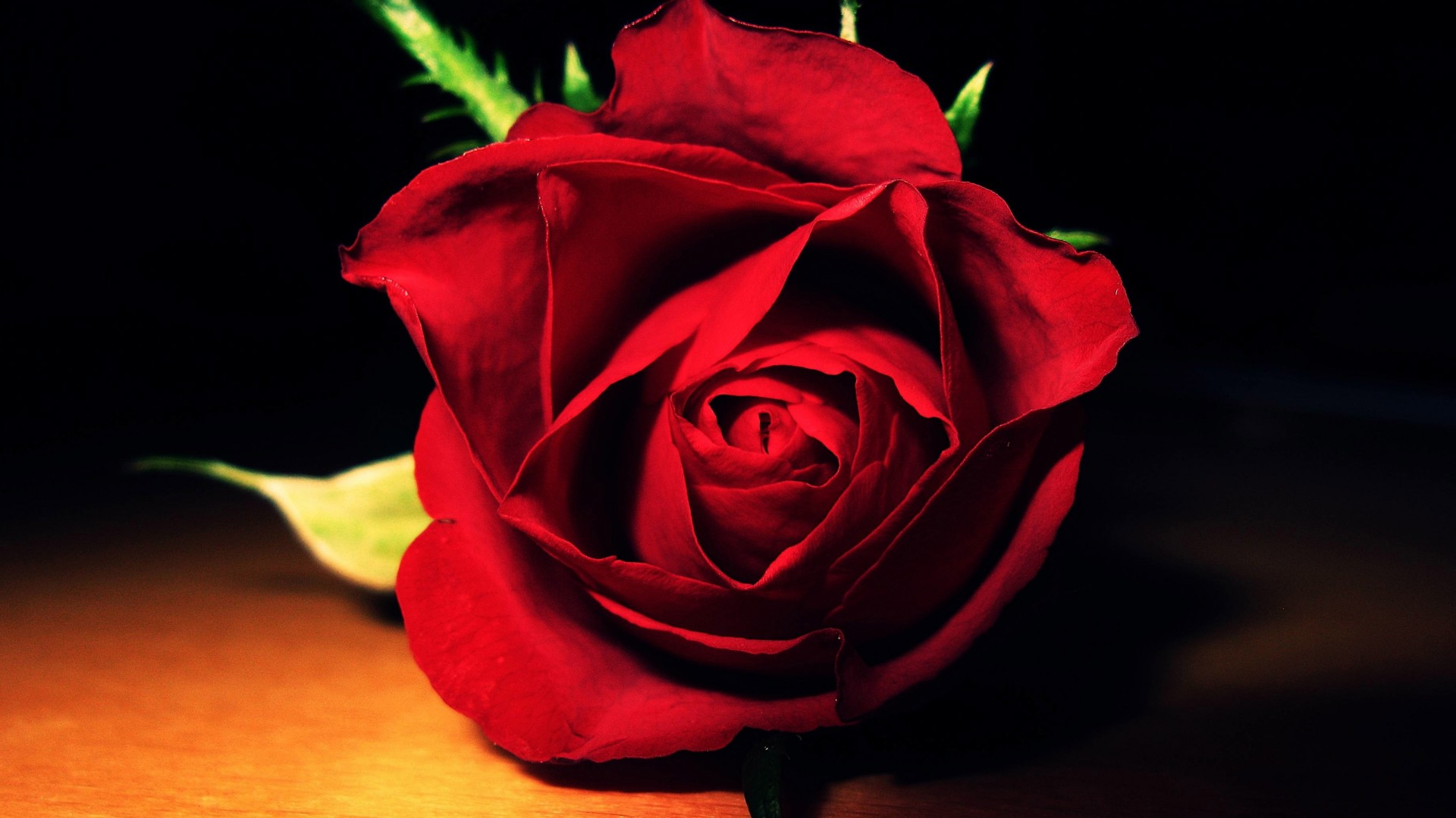 Red Rose Very Nice Flower Wallpaper Background