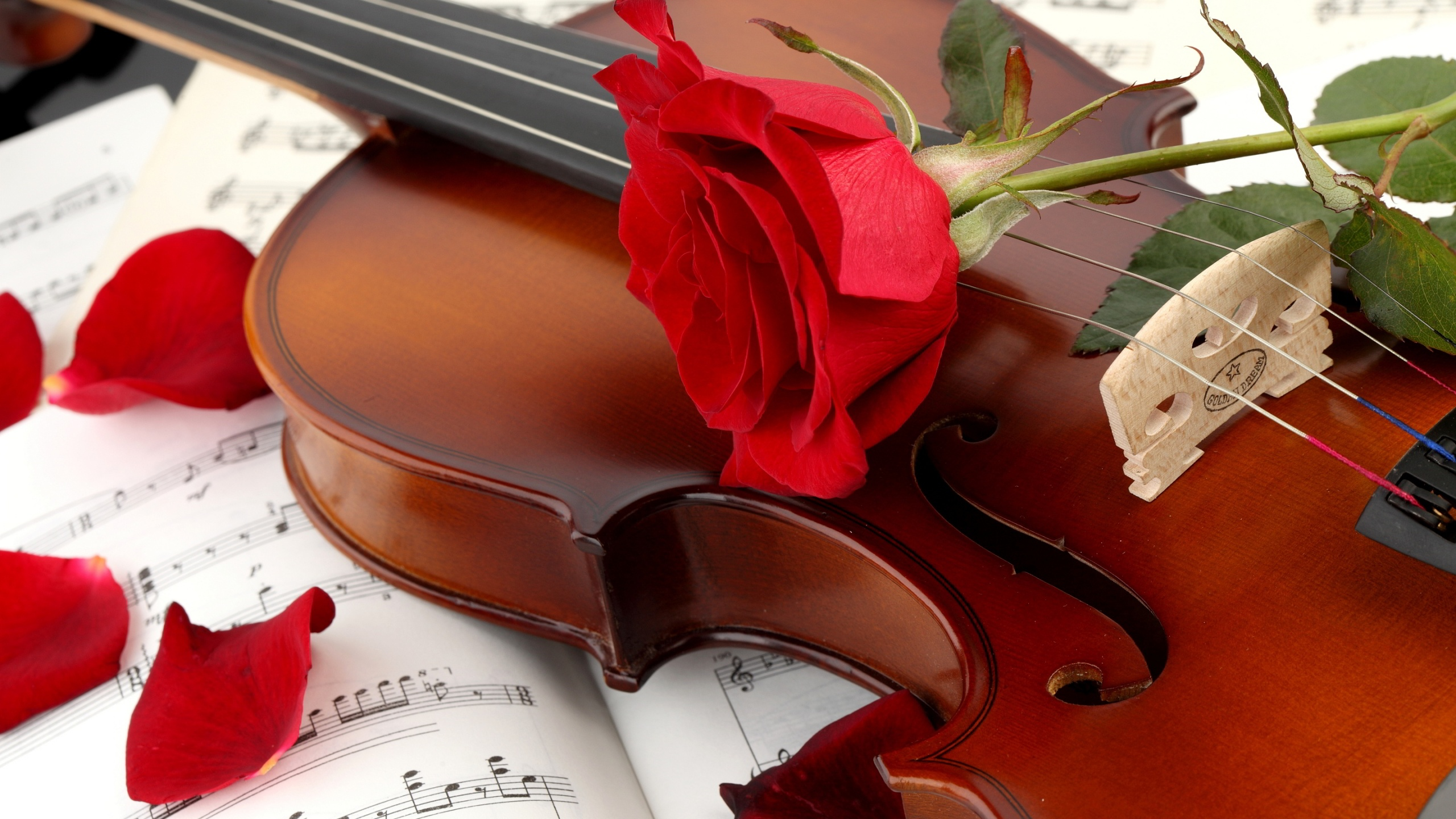 Violin And Red Rose Wallpaper Image