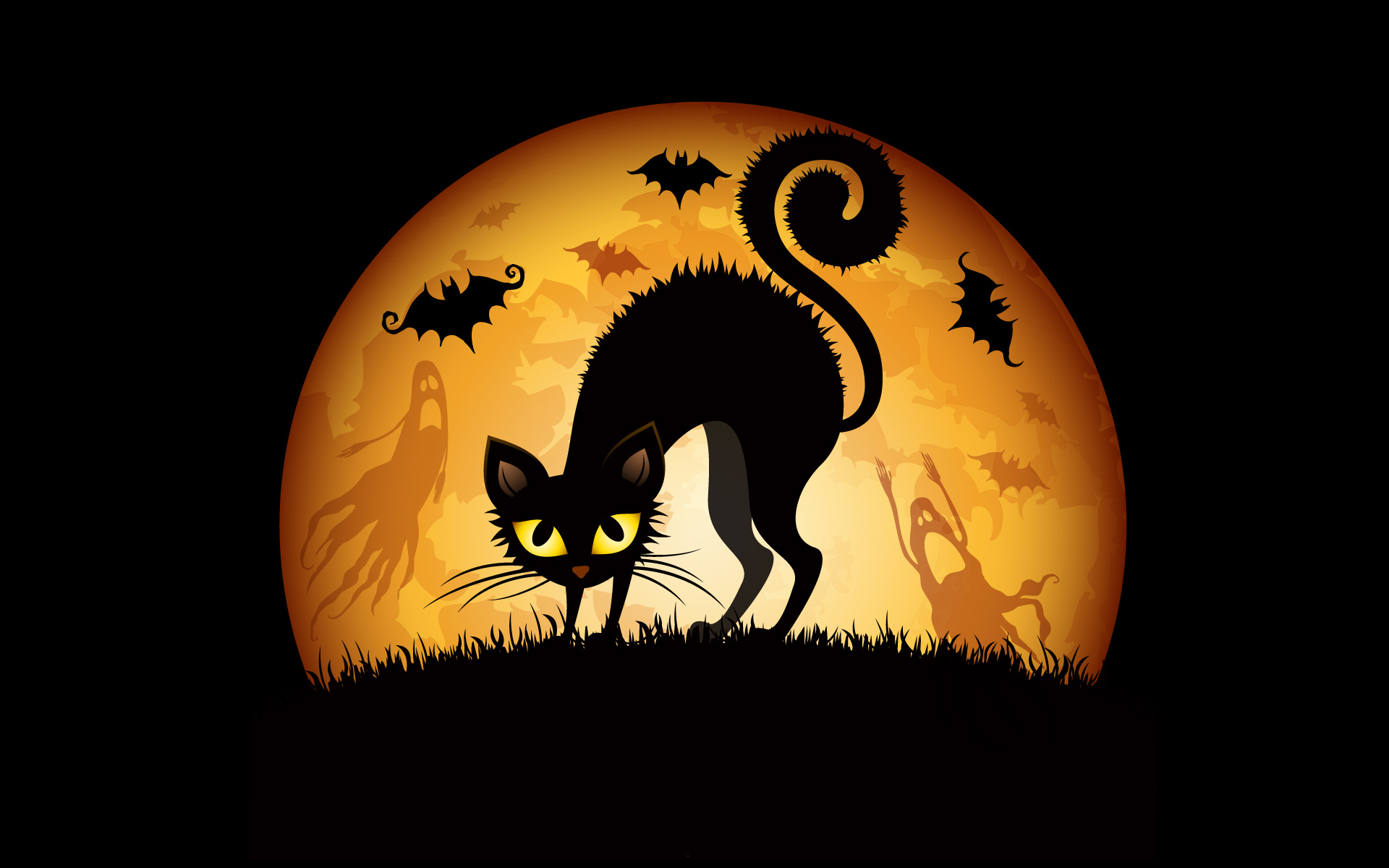 Bats Cat Halloween Wallpaper Image
