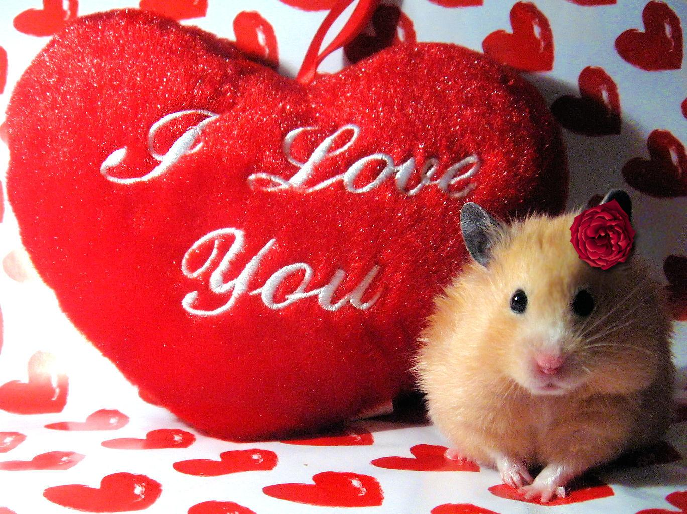 Cute Hamster Love Wallpaper