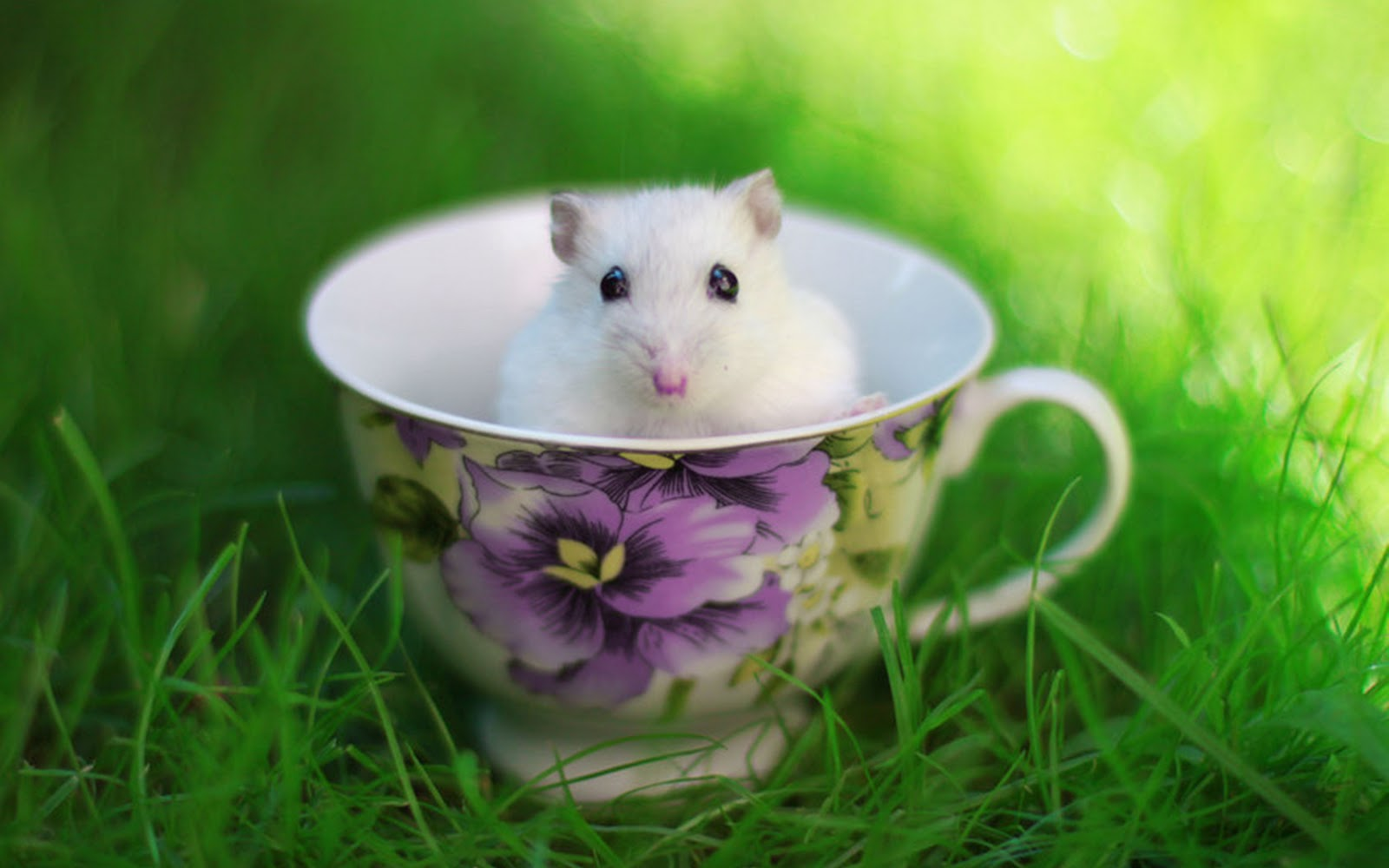Cute White Hamster Wallpaper HD