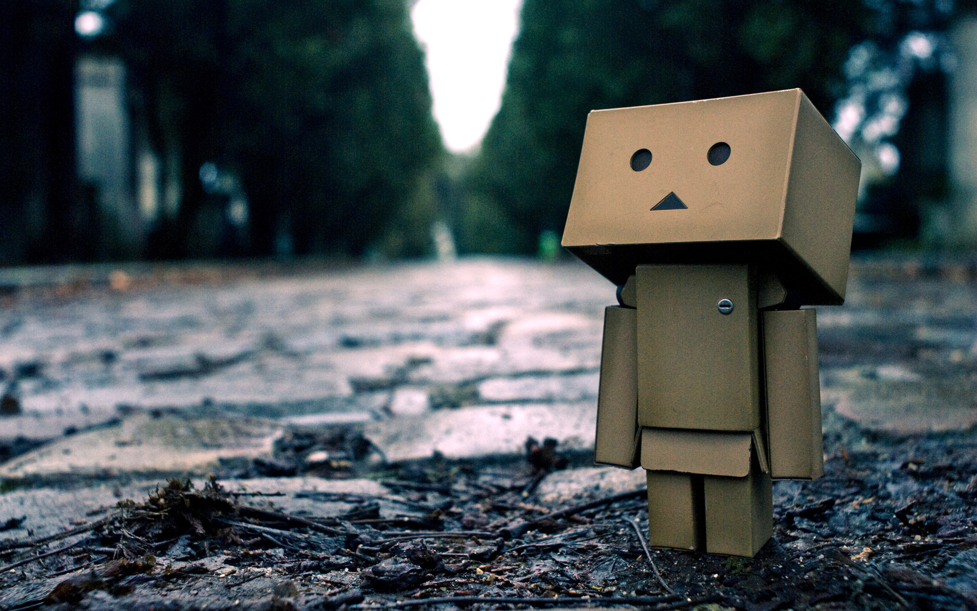 Danbo Looking The Sky Wallpaper