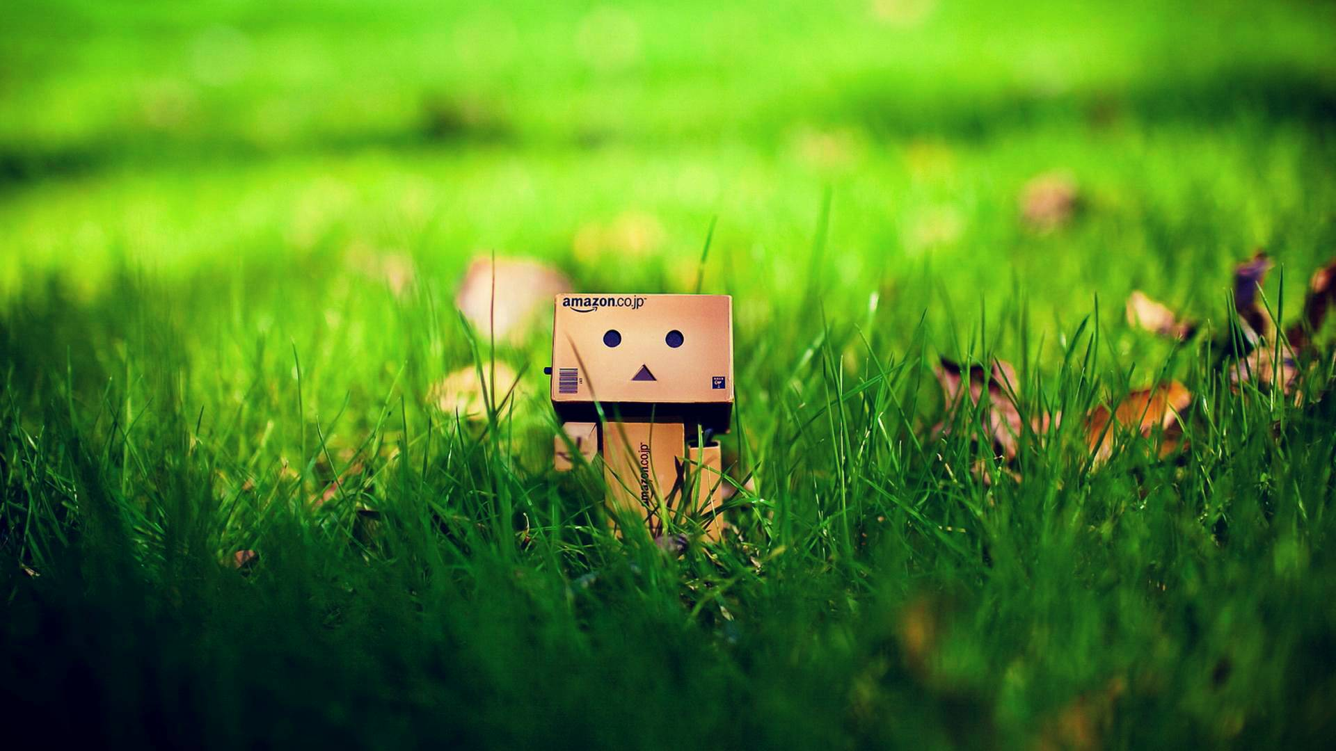 On The Grass Danbo Bokeh Wallpaper