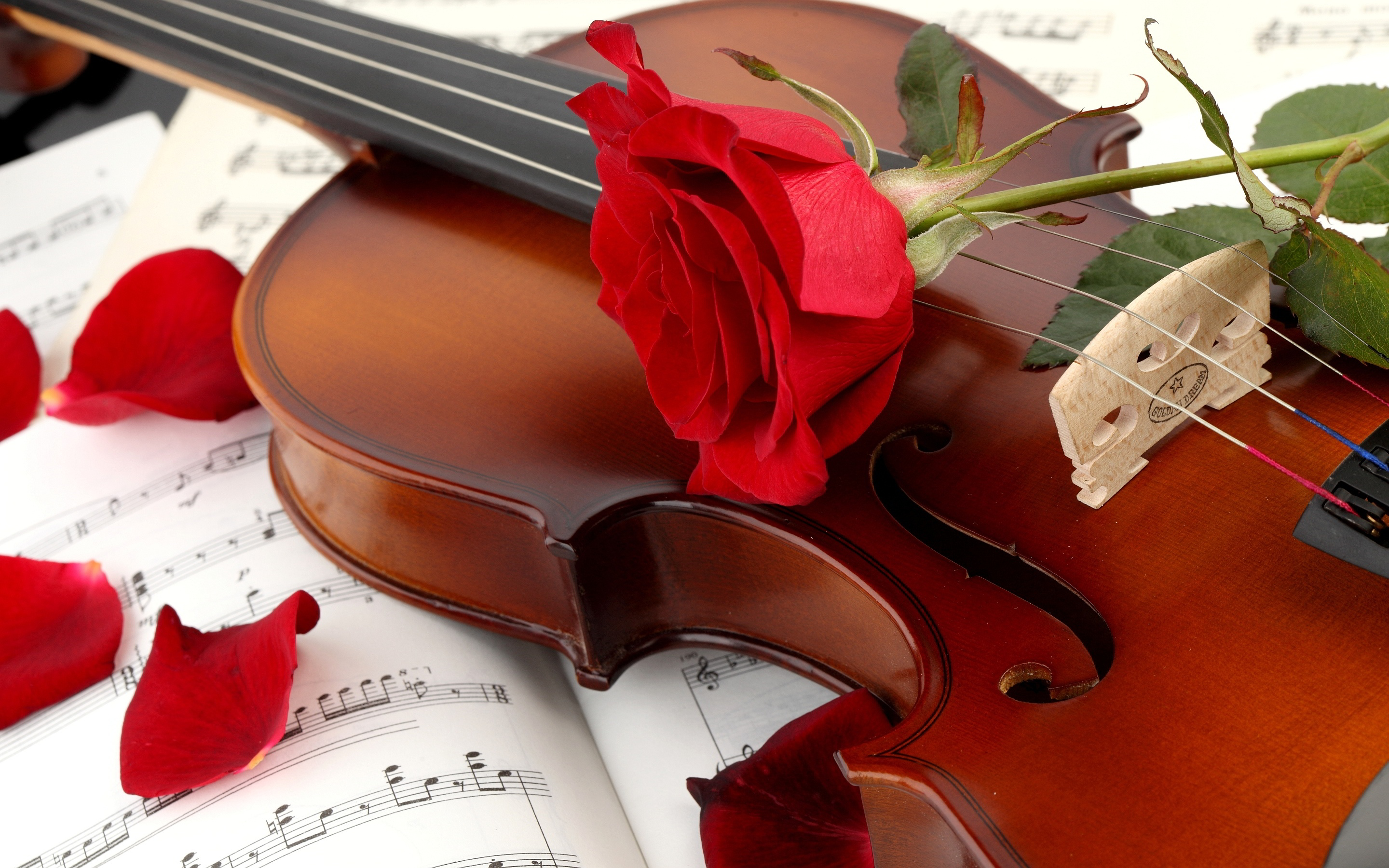 Red Rose Violin Wallpaper Desktop