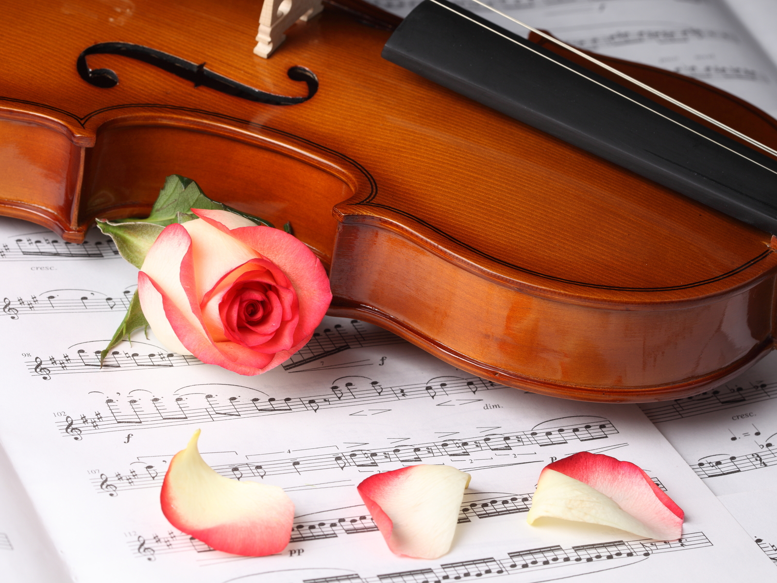 Rose Flower And Violin Wallpaper Free Download