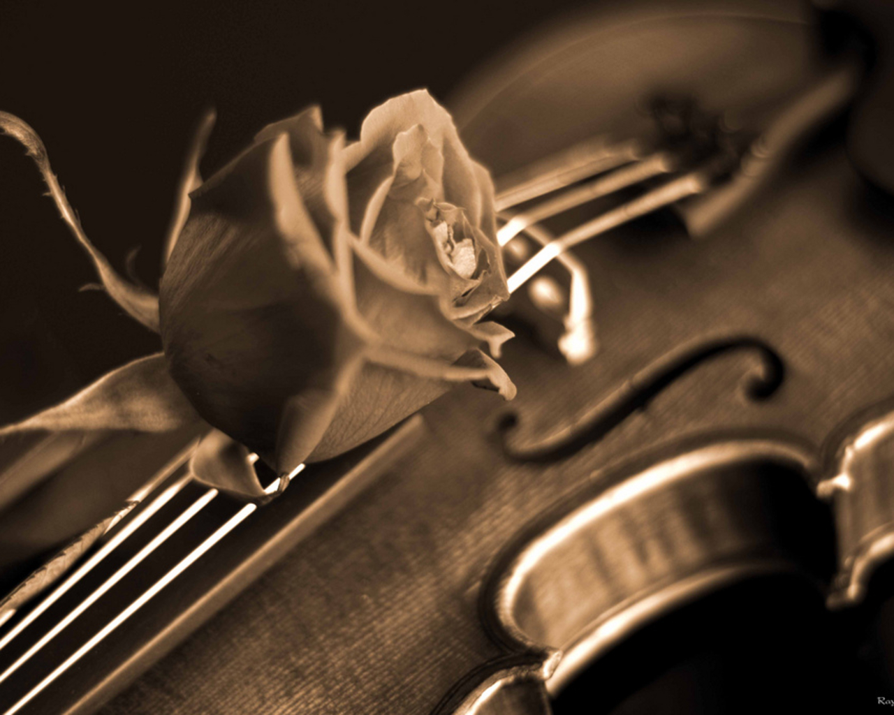 Violin And Rose Old Wallpaper Wallpaper