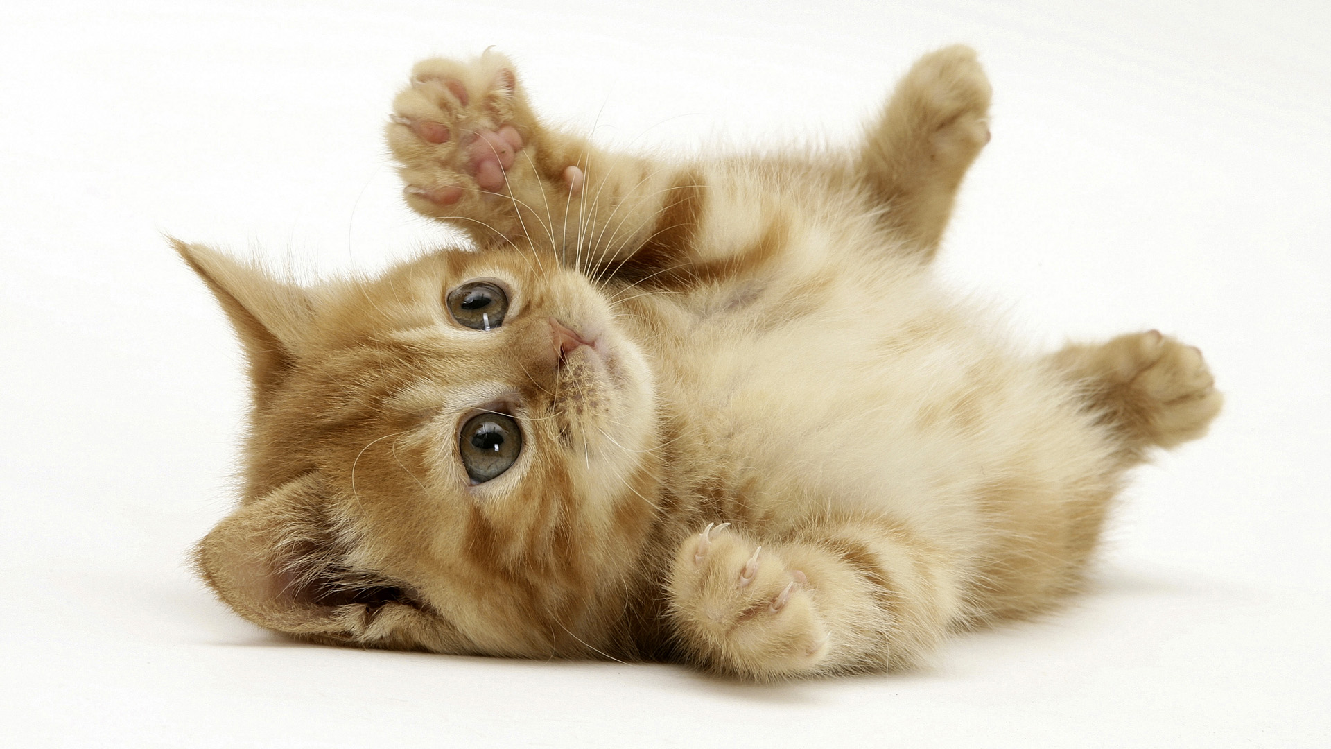 Cute Little Cat Wallpaper HD