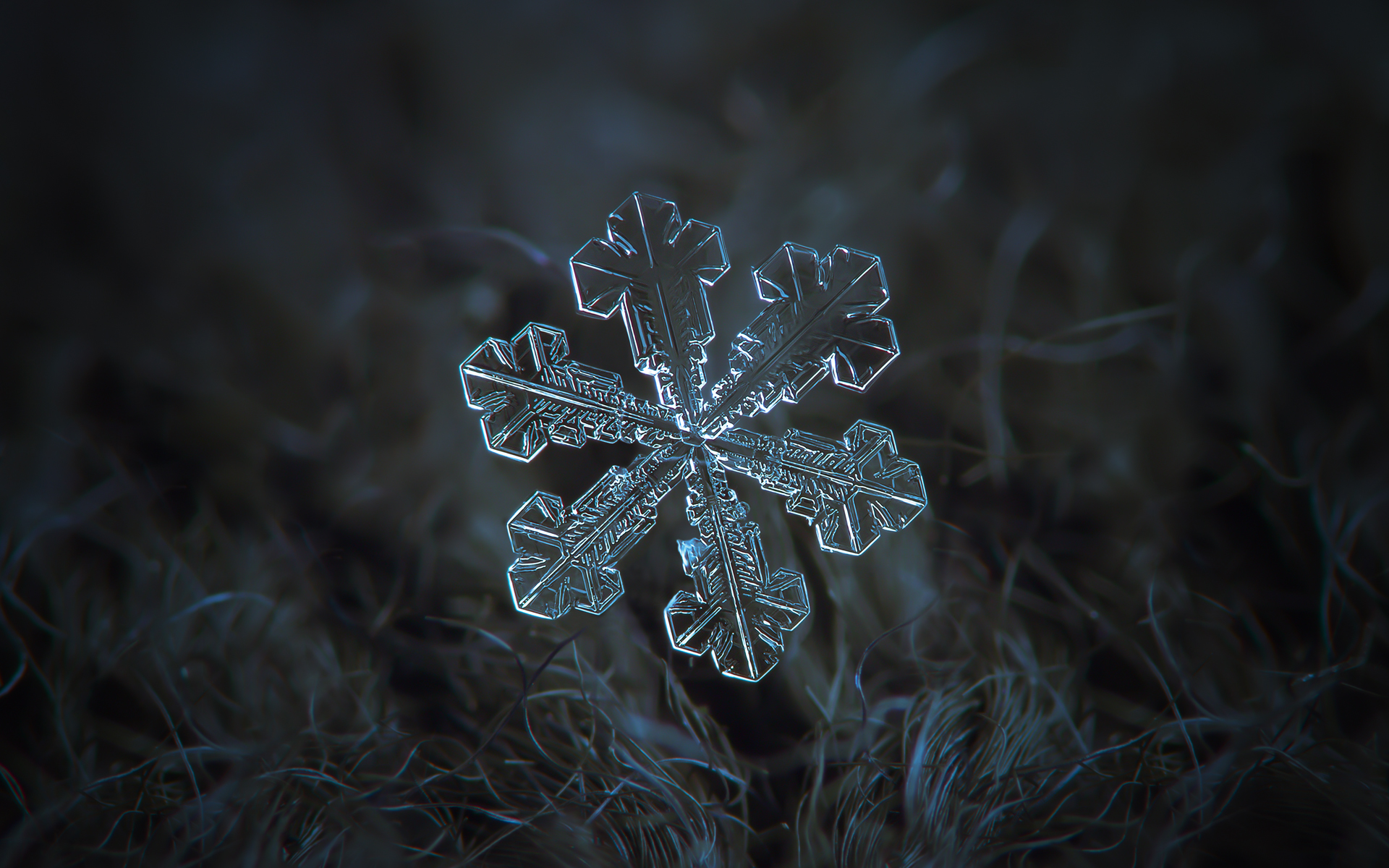Snowflake Frozen Wallpaper for iPhone