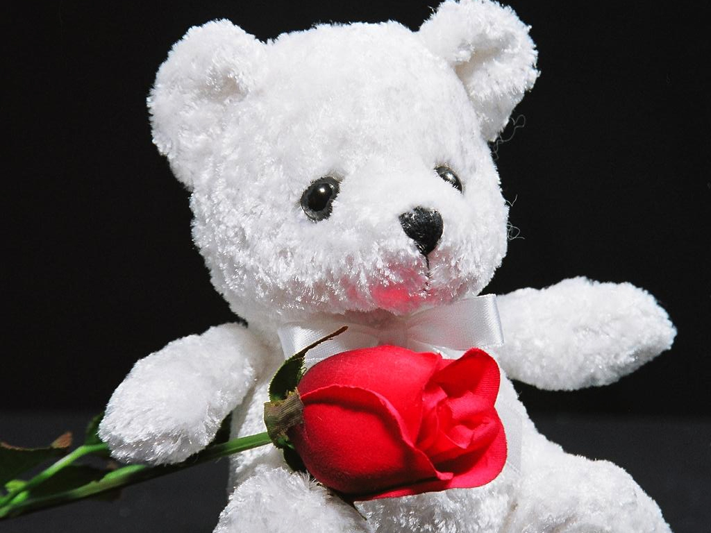 White Teddy Bear And Red Rose Wallpaper