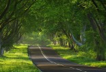 Green Forest Road Wallpaper Android