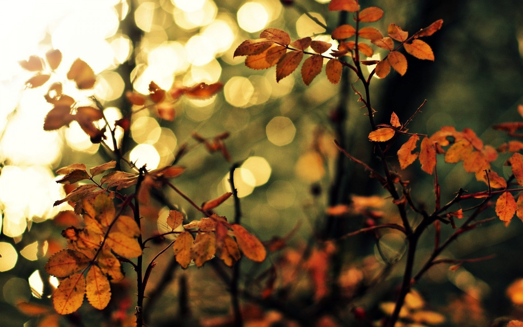 Best Brown Leaf Bokeh Wallpaper Wallpaper