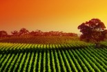 Best VIneyard Sunset Widescreen Wallpaper