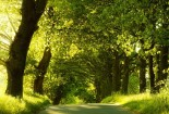 Green Road, Trees Nature, 1080p