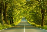 Greenery Road, Nature, Wallpaper
