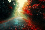 Roads, Red Autumn, Nature, Wallpaper