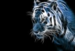 3d, Tiger, Wallpaper