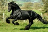 Black Horse, Running, Wallpaper