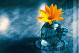 Flower, On Glass, 3d, HD Wallpaper