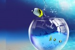Flying, Fish, HD Wallpaper, 3d