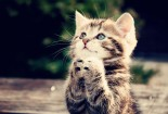 Pray, Cats, Funny, HD Wallpaper