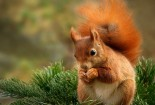 Squirrel, Cute, Animals, HD Wallpaper