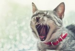 Cool And Funny Cat Laughing