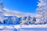 beautiful winter landscape and snowing