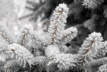 Frost Nature Winter Snow Tree