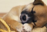 baby-dog-sleeping