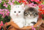 cute-baby-cats-and-flowers