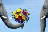 love-and-flowers-between-elephants