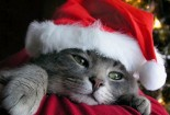 funny-cat-in-christmas